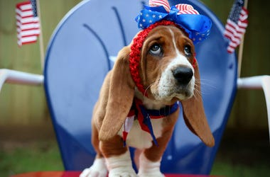 dog dressed for 4th of July