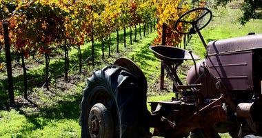 Sonoma Vineyard, Grapes, rows, tractor