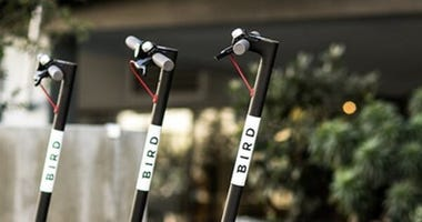Bird e-scooters in San Jose.