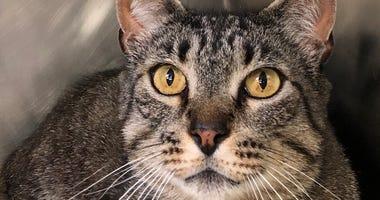 San Bruno Cat Rescue