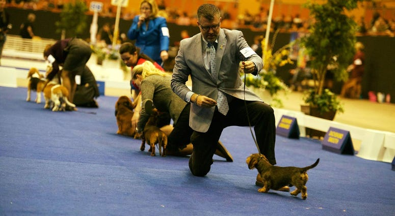 Golden Gate Kennel Club dog show photo from Jan. 27, 2019.