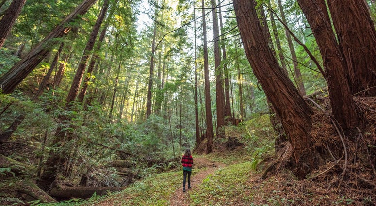 Save the Redwoods League announced it reached an agreement to buy the Cascade Creek property in the Santa Cruz mountains.