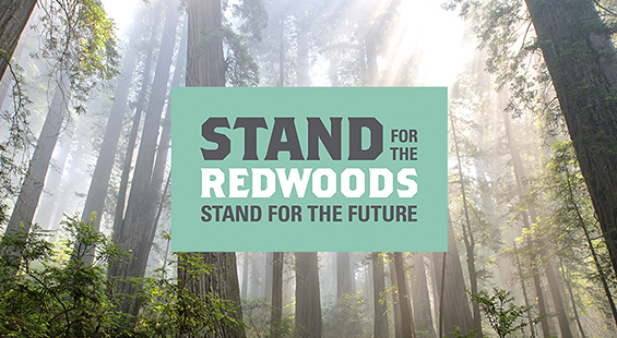 Celebrate Redwoods at Earth Day Festival