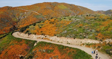 An aerial view of a 'super bloom' of wild poppies blanketing the hills on March 22, 2019 near Lake Elsinore.