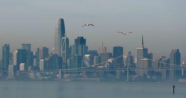 ALAMEDA, CALIFORNIA - NOVEMBER 11: Seagulls fly near the San Francisco skyline on November 11, 2019 in Alameda, California.