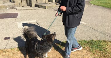 San Francisco Is Adding Pet Waste Stations In Poop Problem Areas