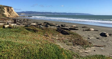 Elephant seals at Drakes Beach