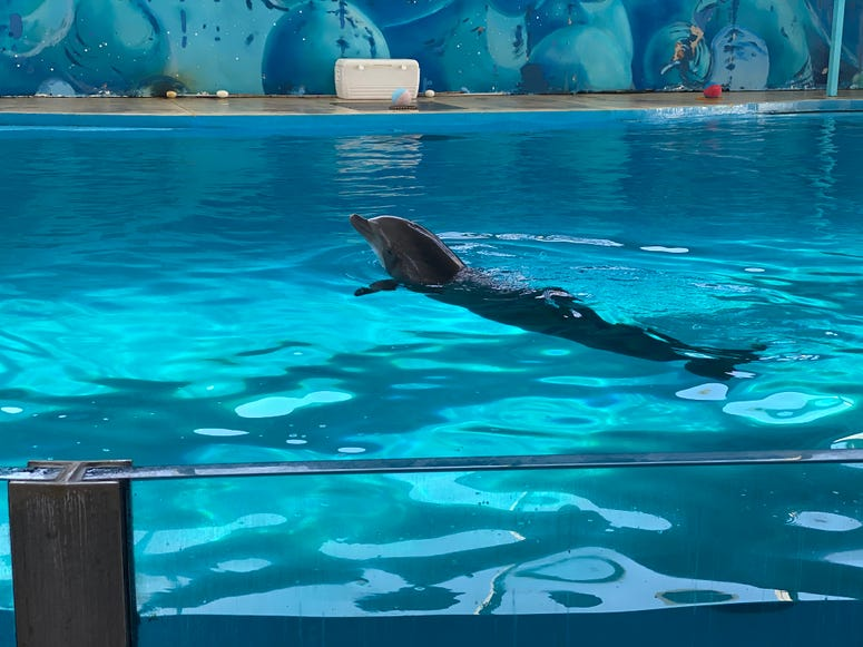 Dolphin show at Discovery Kingdom, Vallejo