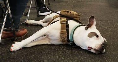 Tony La Russa's Animal Rescue Foundation