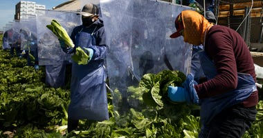 A state agriculture official says farmworkers face major barriers to testing