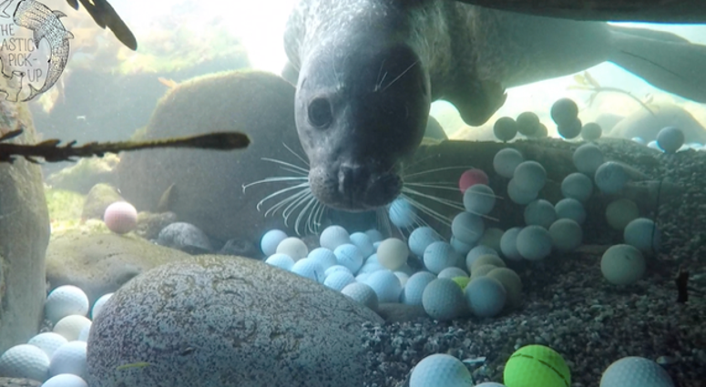 A Monterey Bay Aquarium marine biologist is creating a giant wave sculpted from golf balls into the ocean from the Pebble Beach golf course.