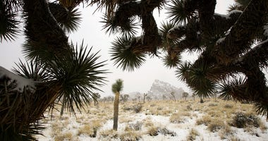 Snow blankets the cacti at Joshua Tree National Park in Southern California.