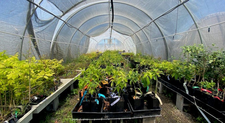 The nursery at Planting Justice, which employs formerly incarcerated people