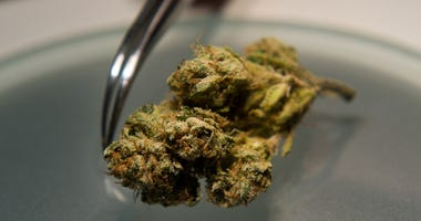 Medical Marijuana Testing