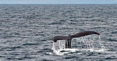 Whale Monterey