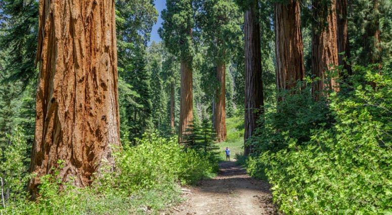 The Save the Redwoods League announced it had purchased the Alder Creek property, which contained hundreds of sequoias.