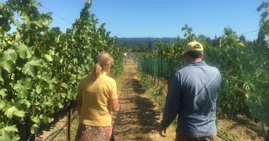 Spottswoode Winery in St. Helena has incorporated a variety of grapes that may better withstand a warming climate than Cabernet.