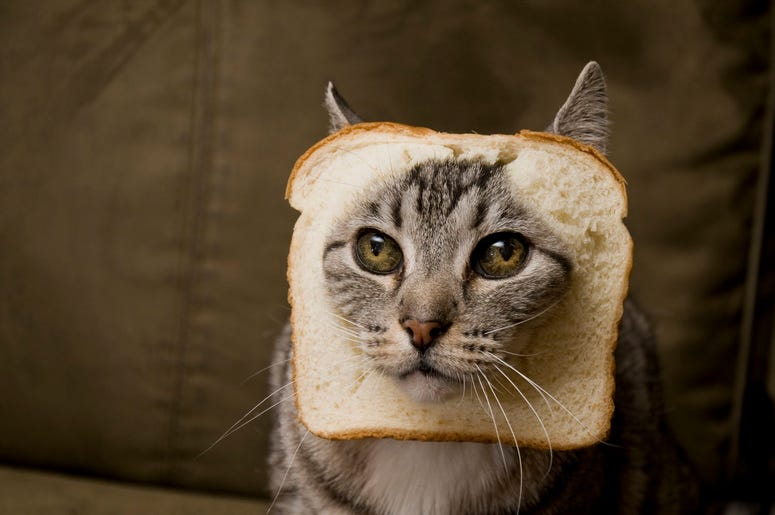 30 Funny Cat Photos That Ll Make You Laugh 93 1 Jack Fm