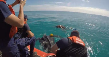 500-Pound Endangered Turtle Freed by the Coast Guard