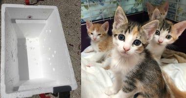 Animal Shelter Rescues Five Kittens Abandoned In Sealed Styrofoam Box