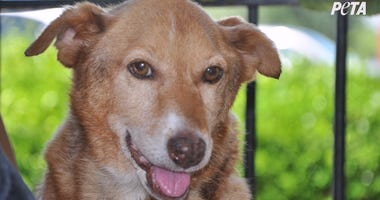 Dog Allegedly Chained Up for 12 Years Gets Incredible Day of Pizza and Belly Rubs