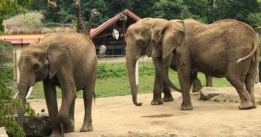Elephants at Pittsburgh Zoo & PPG Aquarium