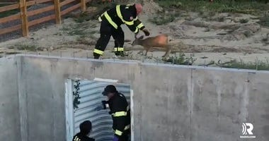Firefighters Rescue Adorable Fawn Trapped In Construction Site