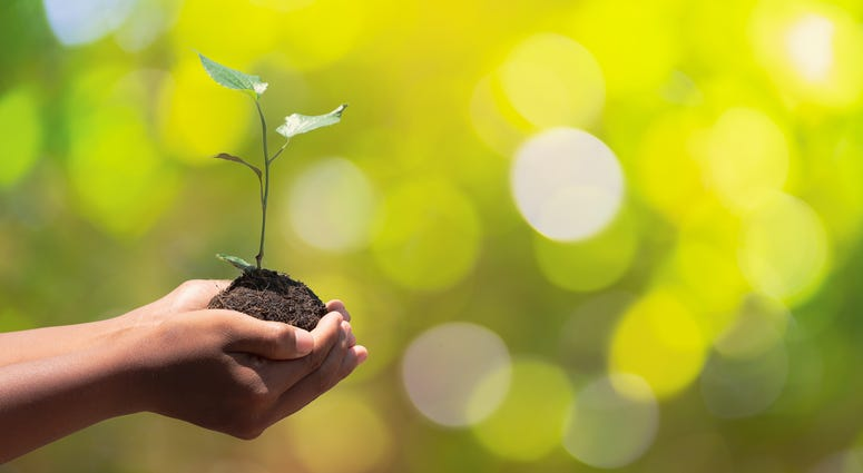 Hands holding tree for Earth Day