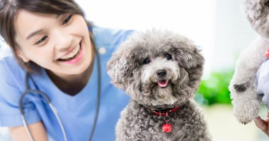 veterinarian doctor and dog