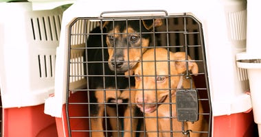 Nearly 100 Dogs Flown to Animal Shelter to Avoid Euthanasia