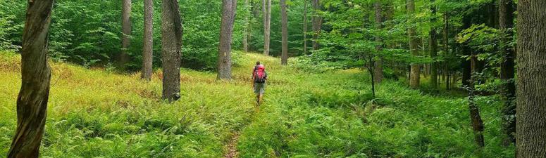 PA State Park trail