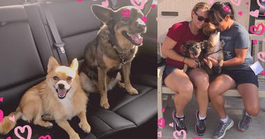 Police Officer Rescues Dog From Wildfires, Quickly Adopts Her New Best Friend
