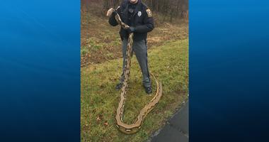 Python found in York PA