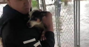 Watch How Volunteers Save Chickens and Dogs Trapped In Cages During Florence
