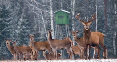 Deer, Deer Stand