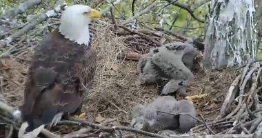 Hays Eagle Cam