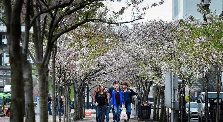Pedestrians make their way through a row of Cherry trees at Riverfront Park along First Ave. North in Nashville, Tenn