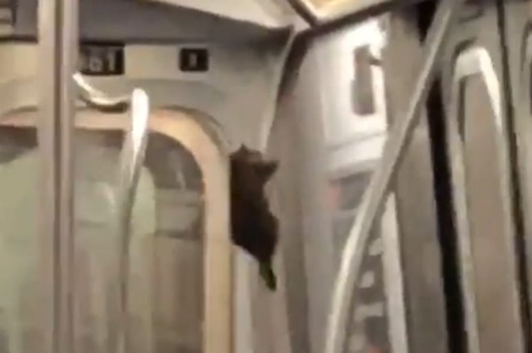 A rat sliding down a pole in a New York subway car