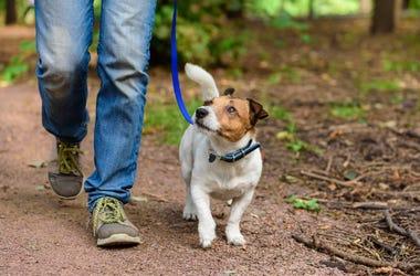New dog walking advice