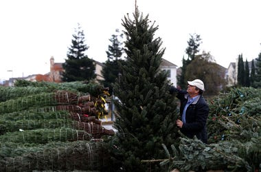 Christmas Trees getting expensive