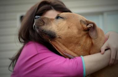 Dog Hugs