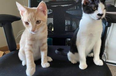 Frankie & Jack