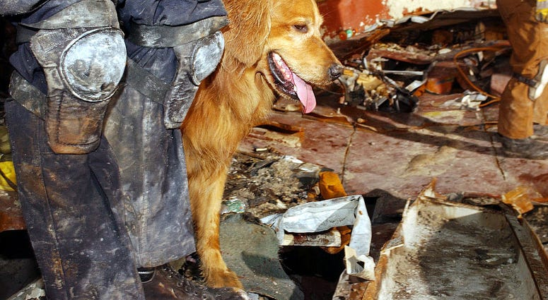 Kent Olson and his dog, Thunder, from Lakewood, Washington search through the rubble for victims of the September 11 terrorist attacks at the World Trade Center September 21, 2001 New York City, NY.