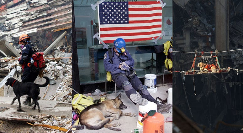 Hero dogs of 9/11
