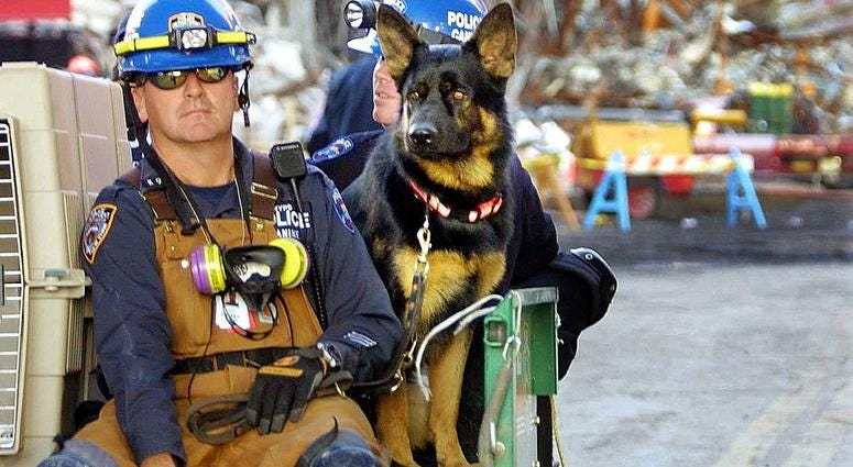 """A police rescue dog is taken away from the wreckage at """"ground zero"""" of the World Trade Center attack October 2, 2001 in New York City."""