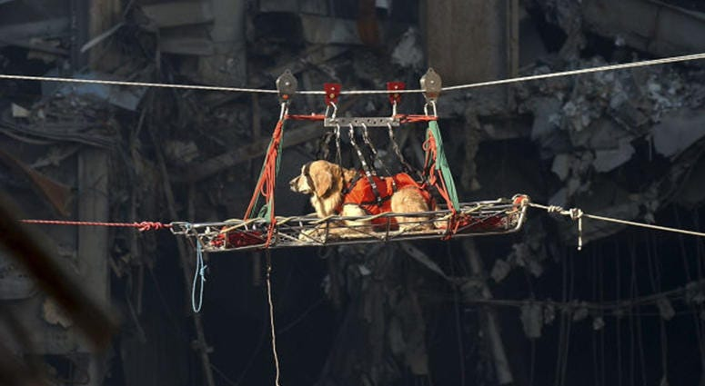 A rescue dog is transported out of the debris of the World Trade Center September 15, 2001 days after the September 11, 2001 terrorist attack.