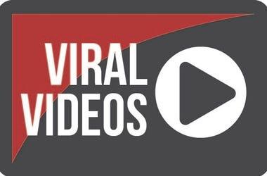 viral vids