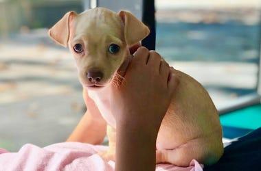 Clementine (Photo credit: Pound Puppy Rescue)