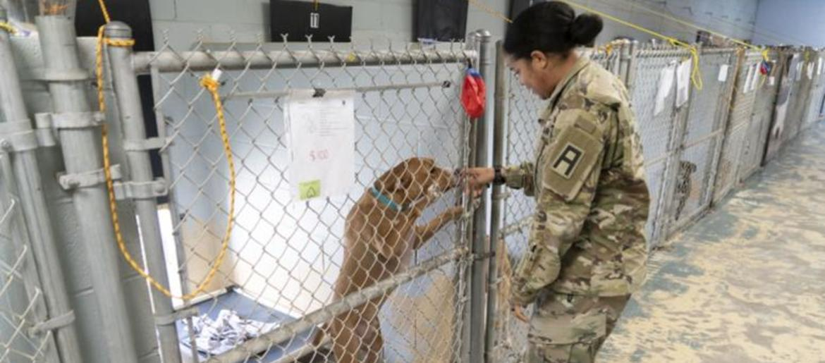 Veterans In California Will Be Able To Adopt Animals For Free Starting In 2020