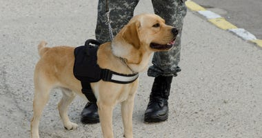 service dog next to a pair of legs wearing a military uniform